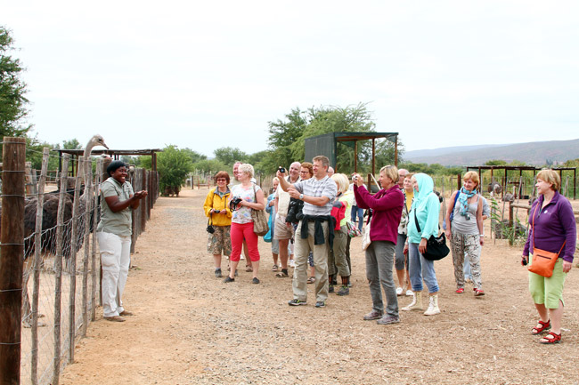 Safari-Ostrich-Farm-Group-Tours-Oudtshoorn-Garden-Route-South-Africa