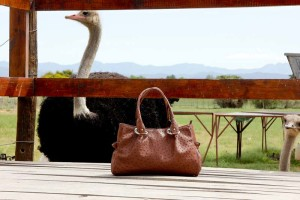 safari-ostrich-farm-ostrich-leather-handbag-shop-oudtshoorn-garden-route-south-africa-3