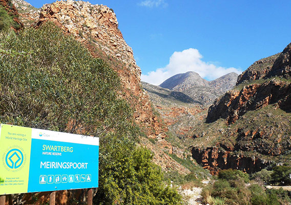 things-to-do-oudtshoorn-safari-ostrich-farm-meiringspoort